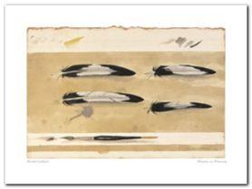 Plumes Et Pinceau plakat obraz 40x30cm