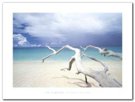 Driftwood, Antigua plakat obraz 80x60cm