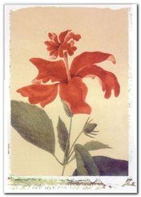 Red Hibiscus plakat obraz 50x70cm