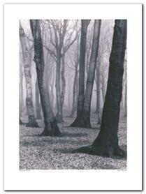 Beach Forest plakat obraz 60x80cm