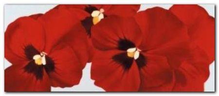 Red II plakat obraz 80x35cm (1)