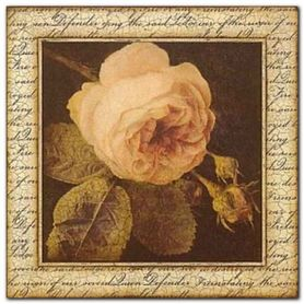 Ancient Rose plakat obraz 33x33cm