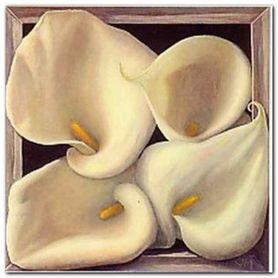 Boxed Calla Lilies plakat obraz 38x38cm