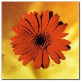 Red Daisy plakat obraz 38x38cm