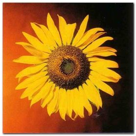 Yellow Sunflower plakat obraz 38x38cm