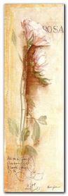 Rosa plakat obraz 35x100cm