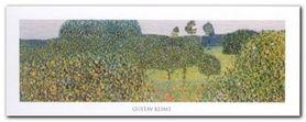 Field Of Poppies plakat obraz 50x20cm