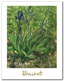 Irises plakat obraz 24x30cm