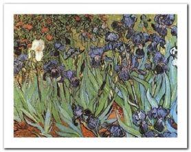 Irises plakat obraz 50x40cm
