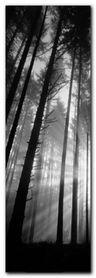Spencer Butte Park plakat obraz 33x95cm