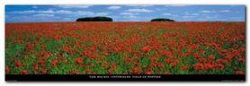Field Of Poppies plakat obraz 95x33cm