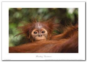 Monkey Business plakat obraz 70x50cm
