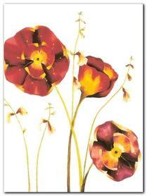 Poppies plakat obraz 60x80cm