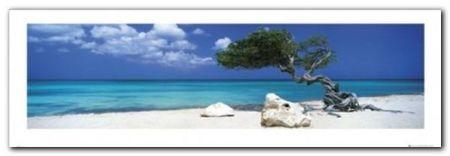 DIVI DIVI TREE plakat obraz 95x33cm (1)