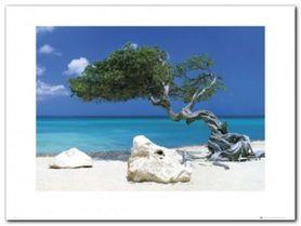 DIVI DIVI TREE plakat obraz 80x60cm