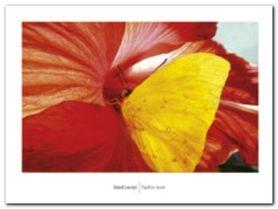 Papillon Jaune plakat obraz 80x60cm