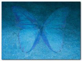 Blue Butterfly plakat obraz 80x60cm
