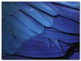 Feathers plakat obraz 80x60cm