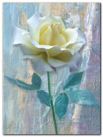 Single White Rose plakat obraz 60x80cm