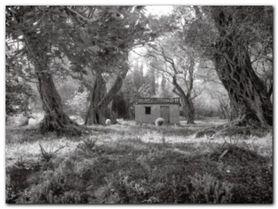 The Woods plakat obraz 80x60cm