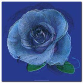 Blue Rose plakat obraz 50x50cm
