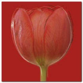 Red Tulip plakat obraz 50x50cm