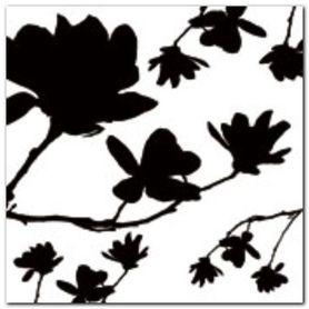 Magnolia Silhouette plakat obraz 50x50cm