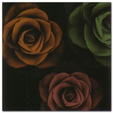Rose Trio I plakat obraz 50x50cm (1)