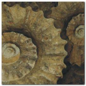 Fossil plakat obraz 50x50cm