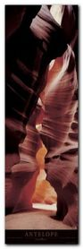 Antelope plakat obraz 33x95cm