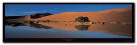 Namib Desert plakat obraz 95x33cm