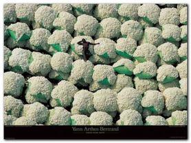 Ballots De Coton plakat obraz 80x60cm