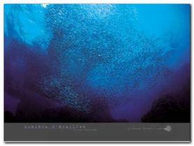 Lumiere D-Ecailles plakat obraz 80x60cm