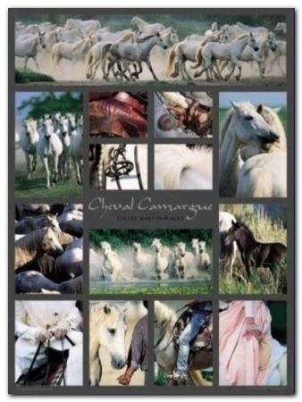 Cheval Camargue plakat obraz 60x80cm (1)