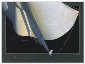 Żagle plakat obraz 40x30cm