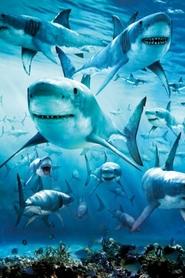 SHARK plakat 61x91cm