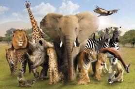 WILD ANIMALS plakat 91x61cm