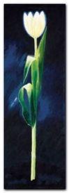 Weisse Tulpe plakat obraz 25x70cm