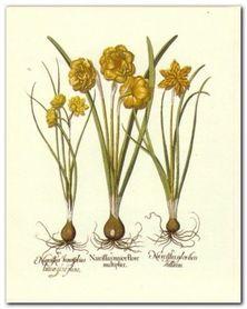 Botanical II plakat obraz 24x30cm