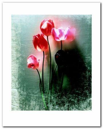 Five Tulips plakat obraz 40x50cm (1)