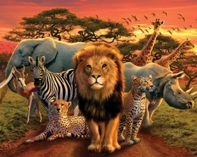 AFRICAN KINGDOM plakat 50x40cm