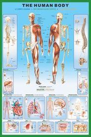 THE HUMAN BODY plakat 61x91cm