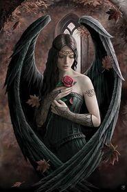 ANGEL ROSE plakat 61x91cm