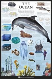 OCEAN (ANG) plakat 61x91cm