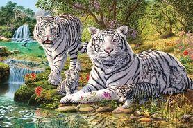 WHITE TIGER plakat 91x61cm