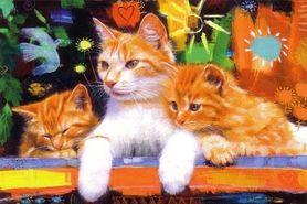 HAPPY CATS plakat 91x61cm