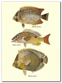 Tropical Fish plakat obraz 30x40cm