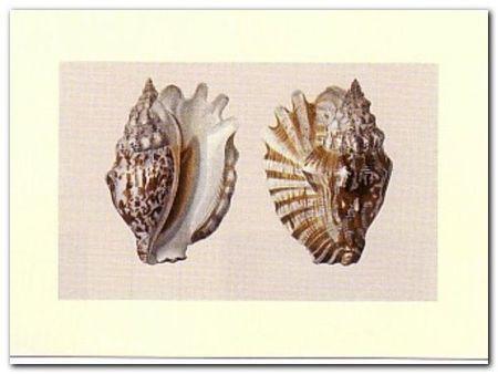 Shells plakat obraz 40x30cm (1)