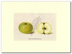 Apfel plakat obraz 40x30cm