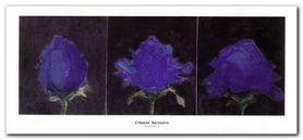 King Rose I plakat obraz 138x64cm